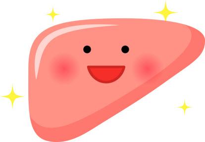 オルチニンで元気になる肝臓